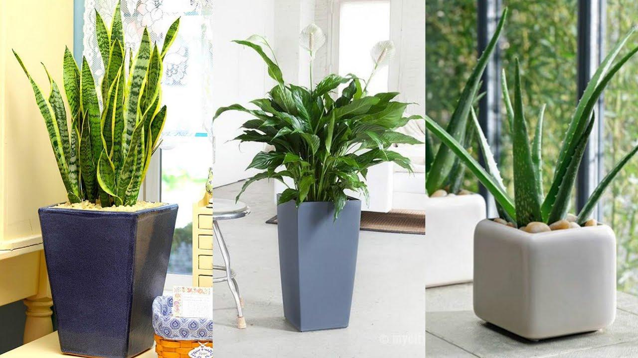 дизайн спальни растениями
